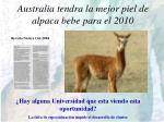 australia tendra la mejor piel de alpaca bebe para el 2010