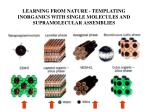 learning from nature templating inorganics with single molecules and supramolecular assemblies