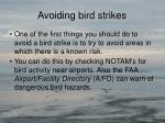 avoiding bird strikes