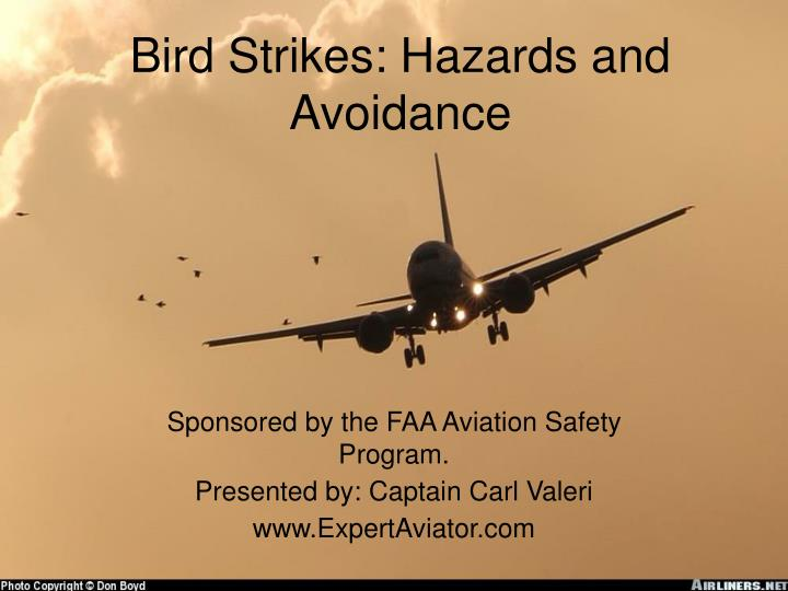 bird strikes hazards and avoidance n.