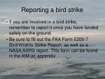 reporting a bird strike1