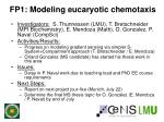 fp1 modeling eucaryotic chemotaxis