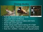 diving ducks