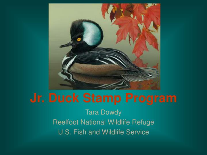 jr duck stamp program n.