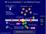 ms as an autoimmune t cell mediated process