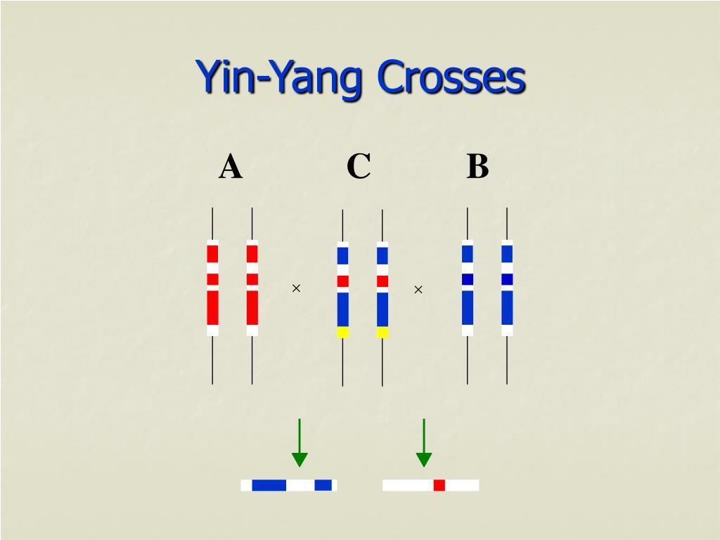 Yin-Yang Crosses