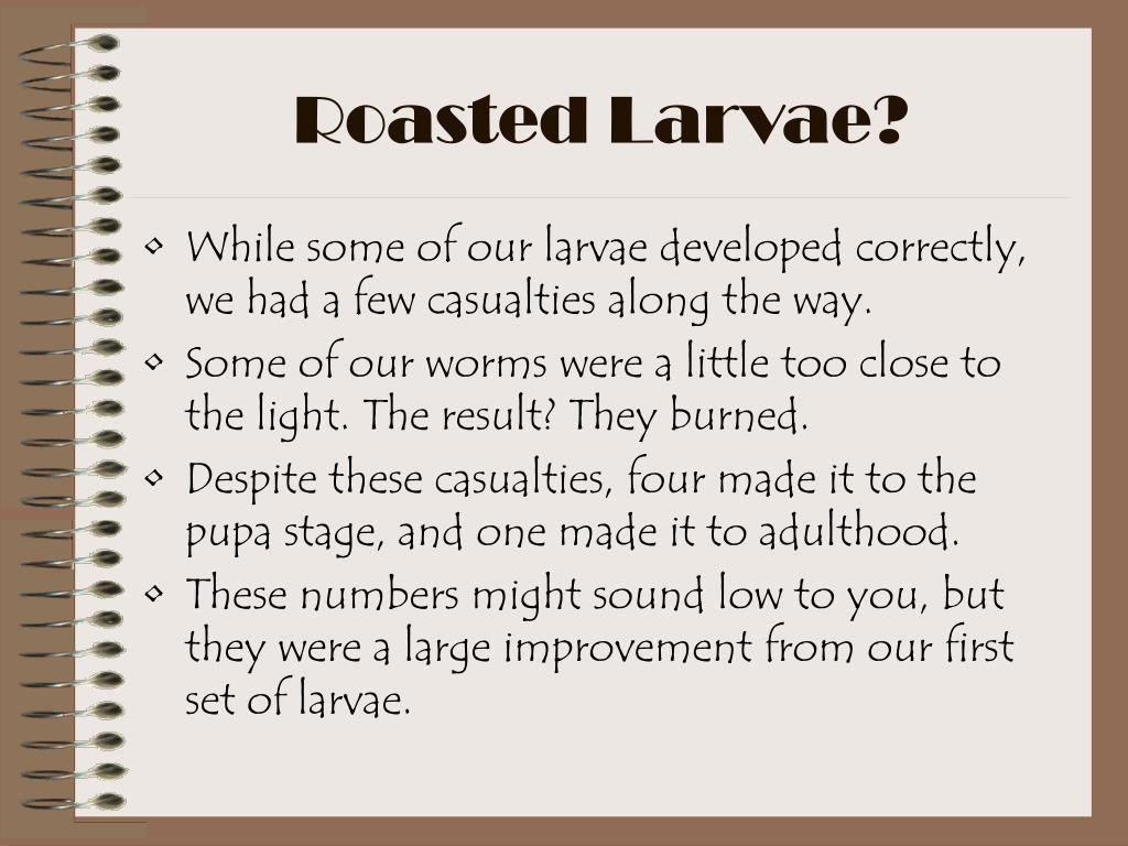 Roasted Larvae?