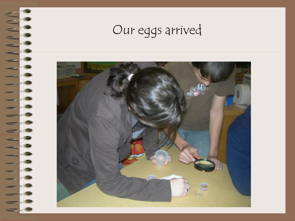 Our eggs arrived