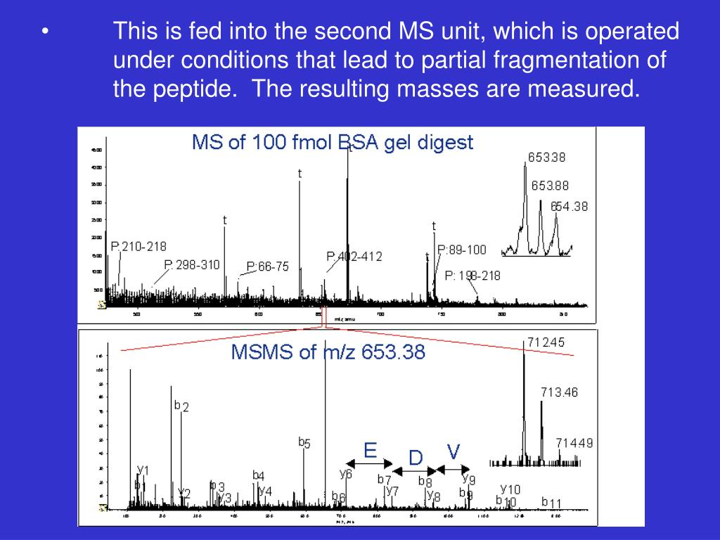 This is fed into the second MS unit, which is operated under conditions that lead to partial fragmentation of the peptide.  The resulting masses are measured.