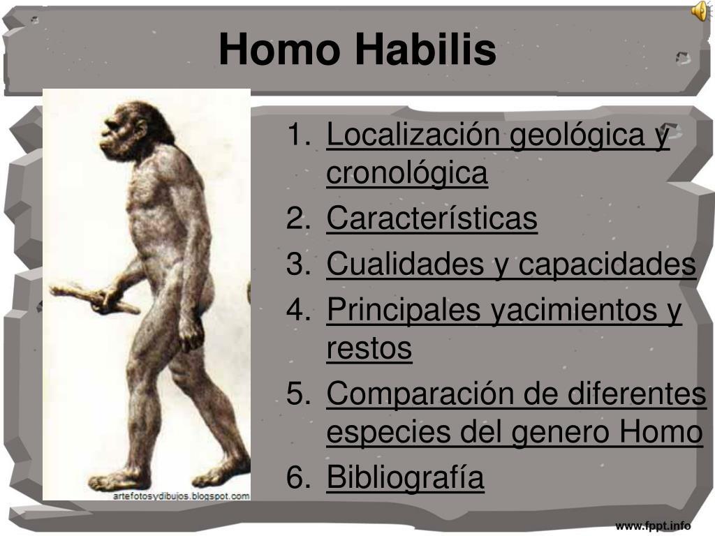 homo habilis l.