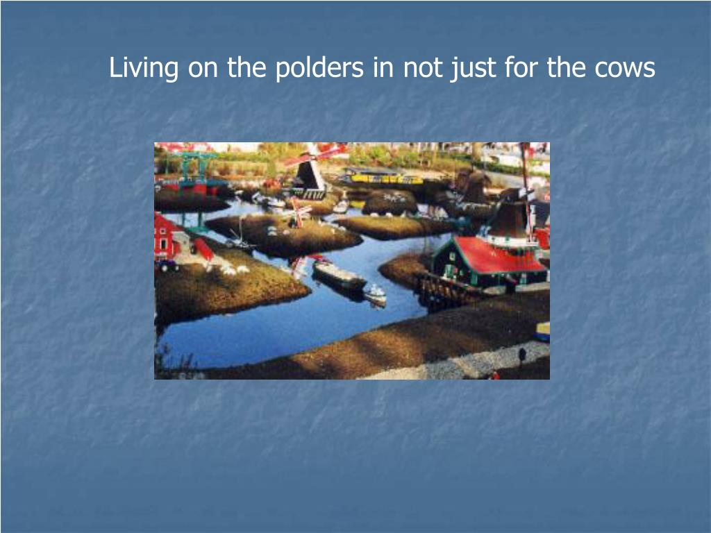 Living on the polders in not just for the cows