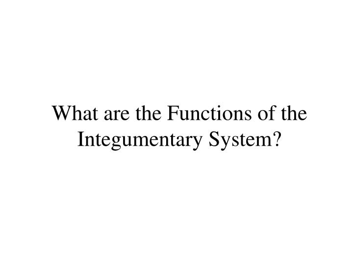 What are the functions of the integumentary system