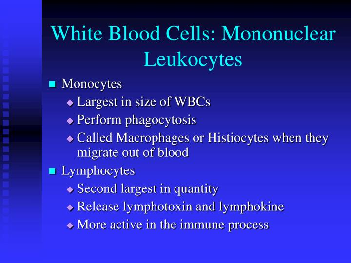 White Blood Cells: Mononuclear Leukocytes