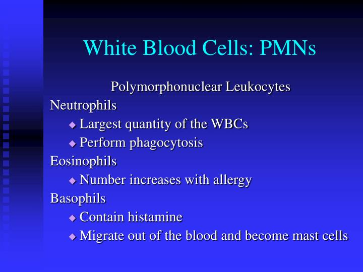 White Blood Cells: PMNs