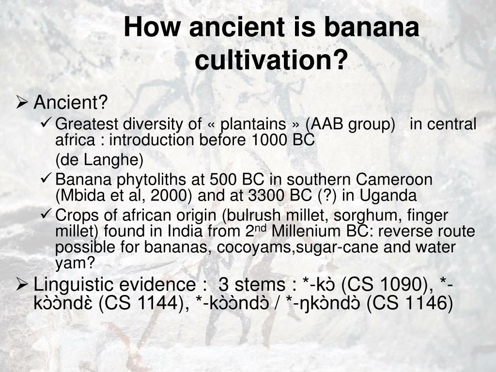How ancient is banana cultivation?