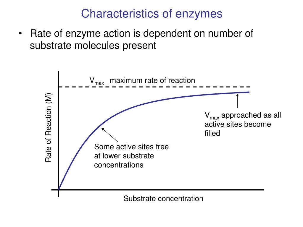 recognise the characteristics of enzymes and