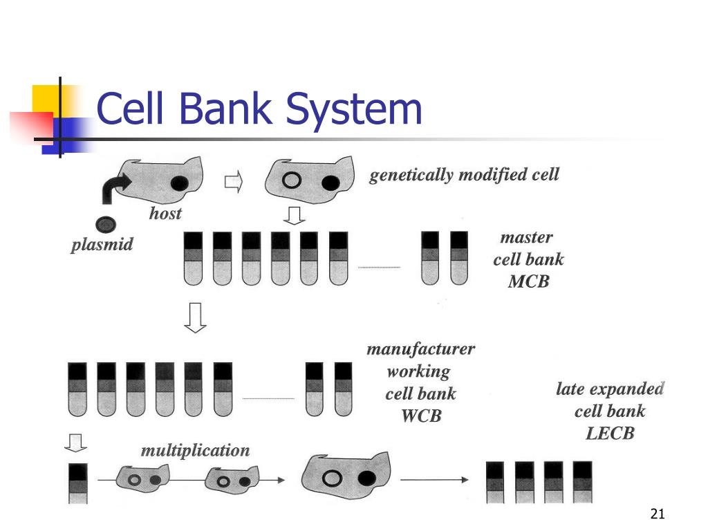 Cell Bank System