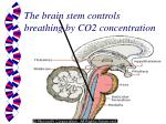 the brain stem controls breathing by co2 concentration