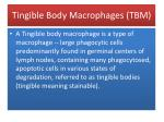 tingible body macrophages tbm