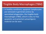 tingible body macrophages tbm147