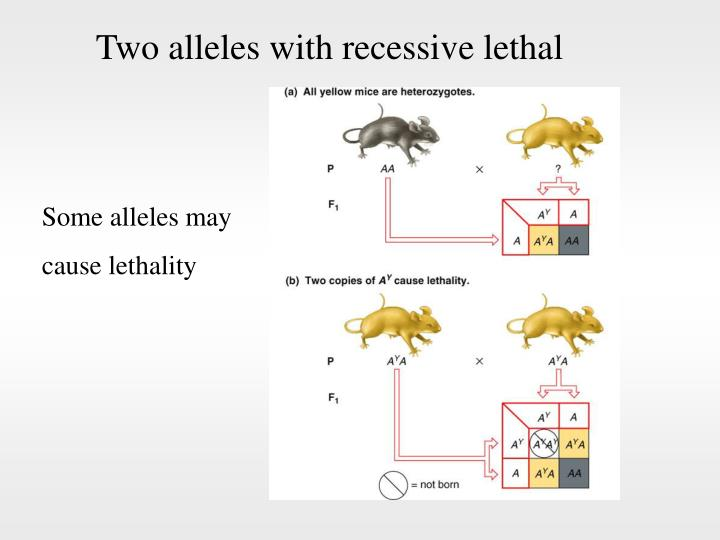 Two alleles with recessive lethal