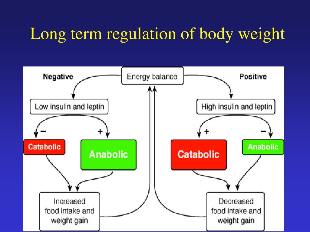 Long term regulation of body weight