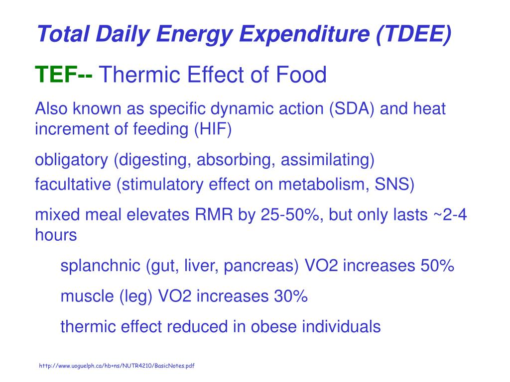 Total Daily Energy Expenditure (TDEE)