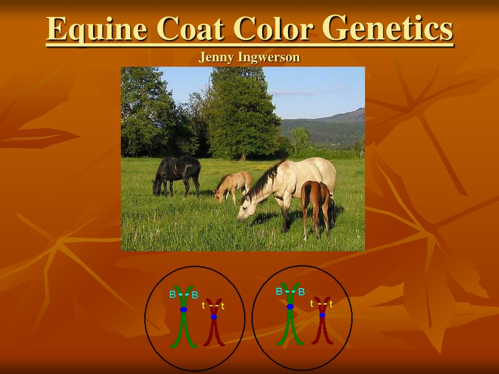 equine coat color genetics jenny ingwerson l.