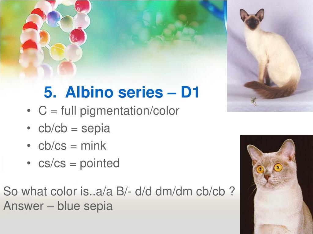 5.  Albino series – D1