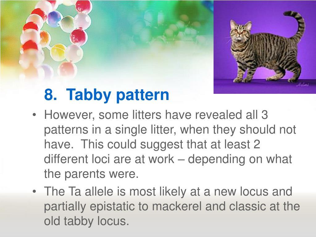 8.  Tabby pattern