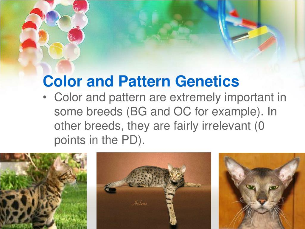 Color and Pattern Genetics