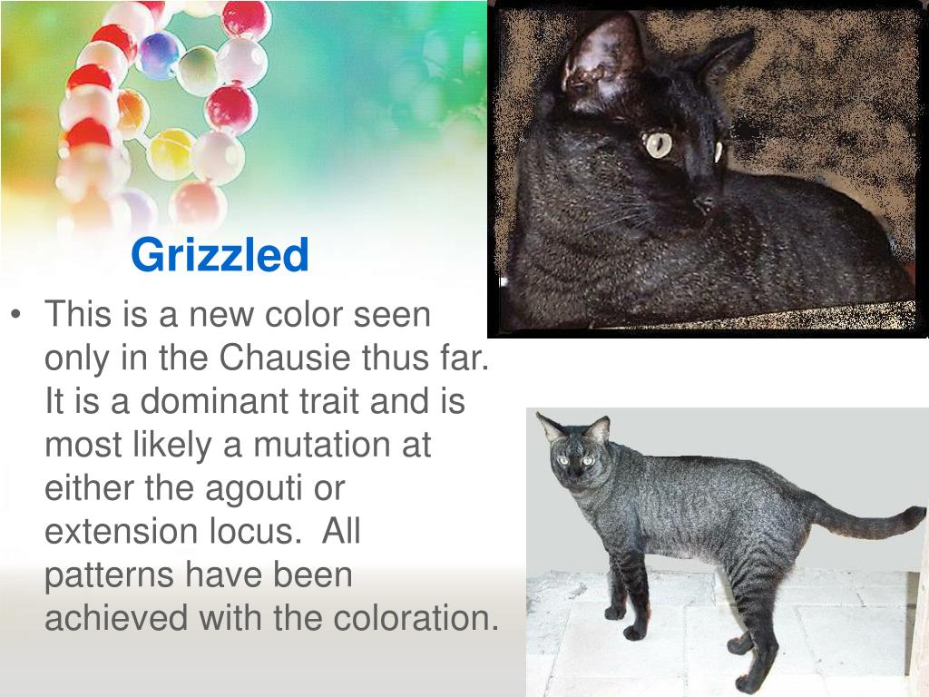 Grizzled