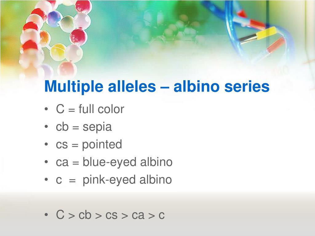 Multiple alleles – albino series