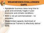 weaknesses challenges gaps20