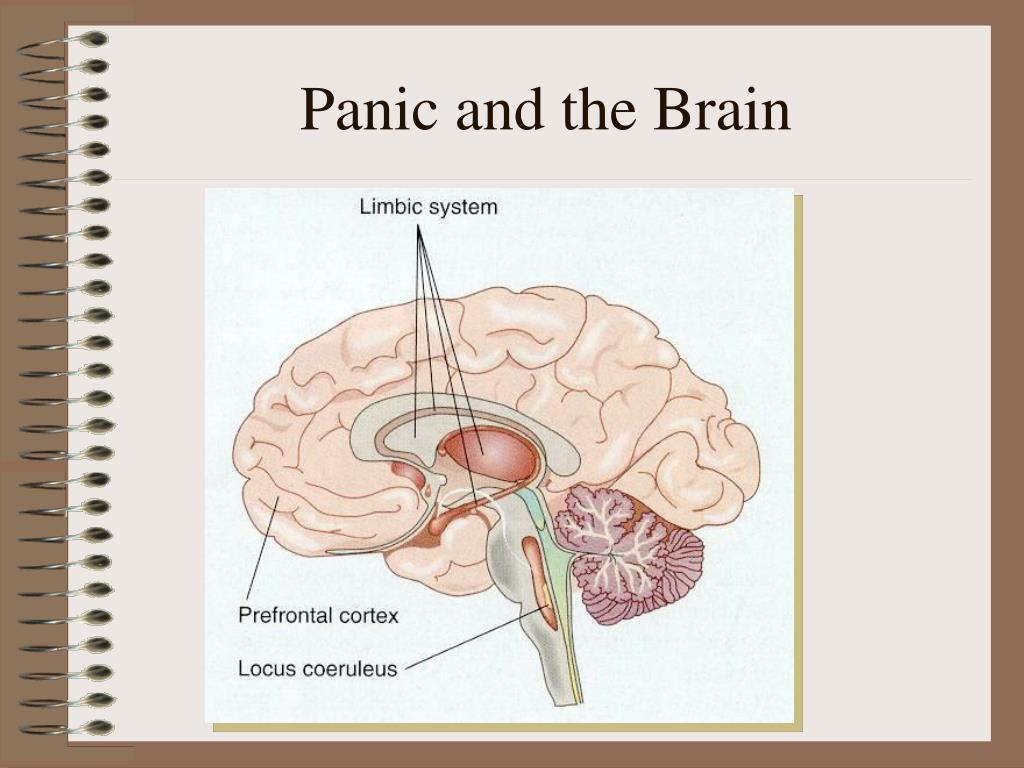 Panic and the Brain