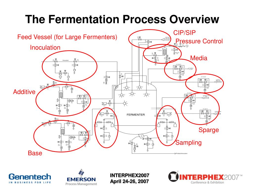 The Fermentation Process Overview