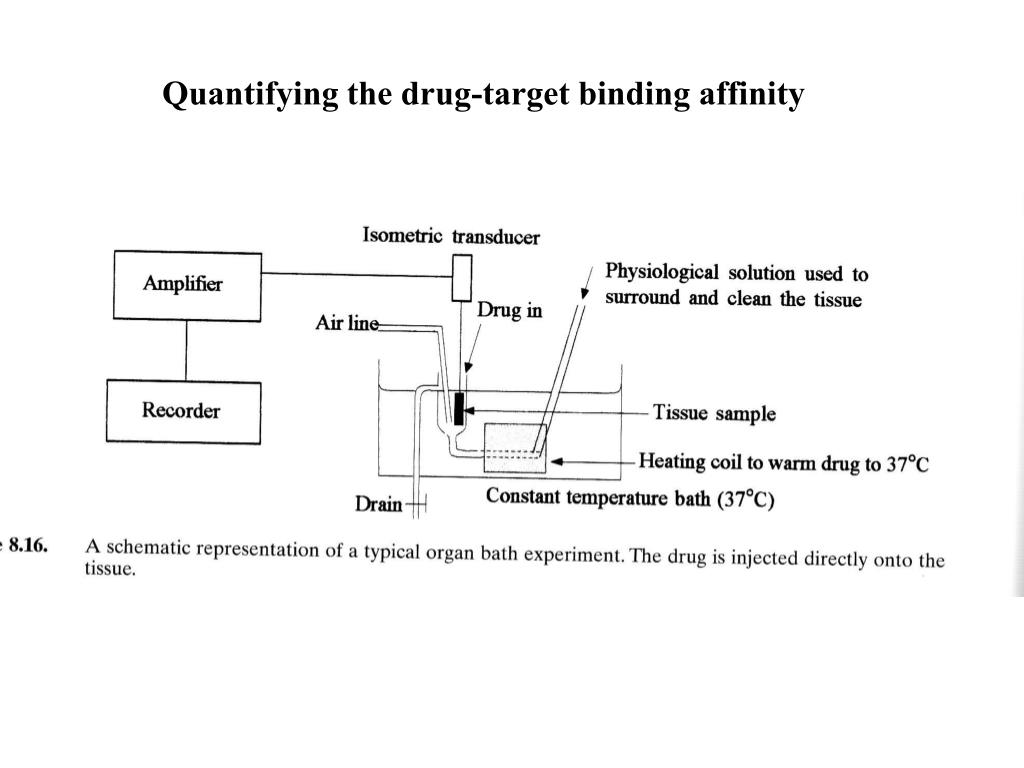 PPT - Quantifying the drug-target binding affinity PowerPoint
