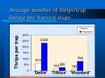 average number of thrips trap during pre harvest stage