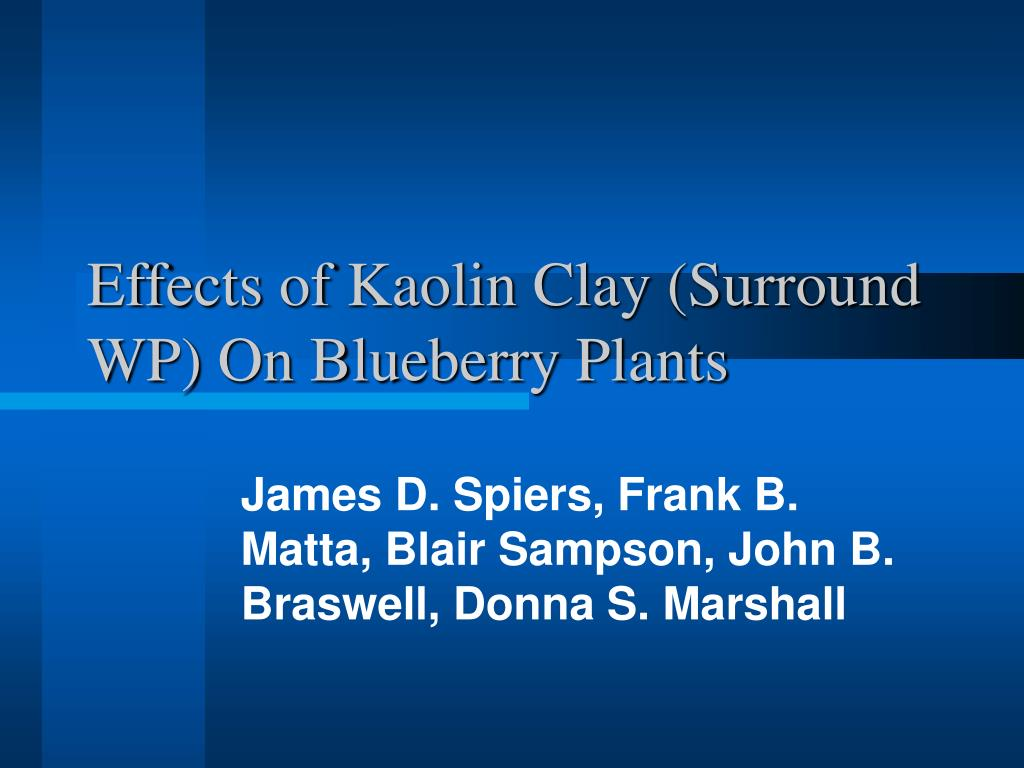effects of kaolin clay surround wp on blueberry plants l.