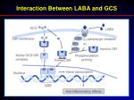 interaction between laba and gcs