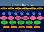 receptor overview