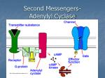 second messengers adenylyl cyclase