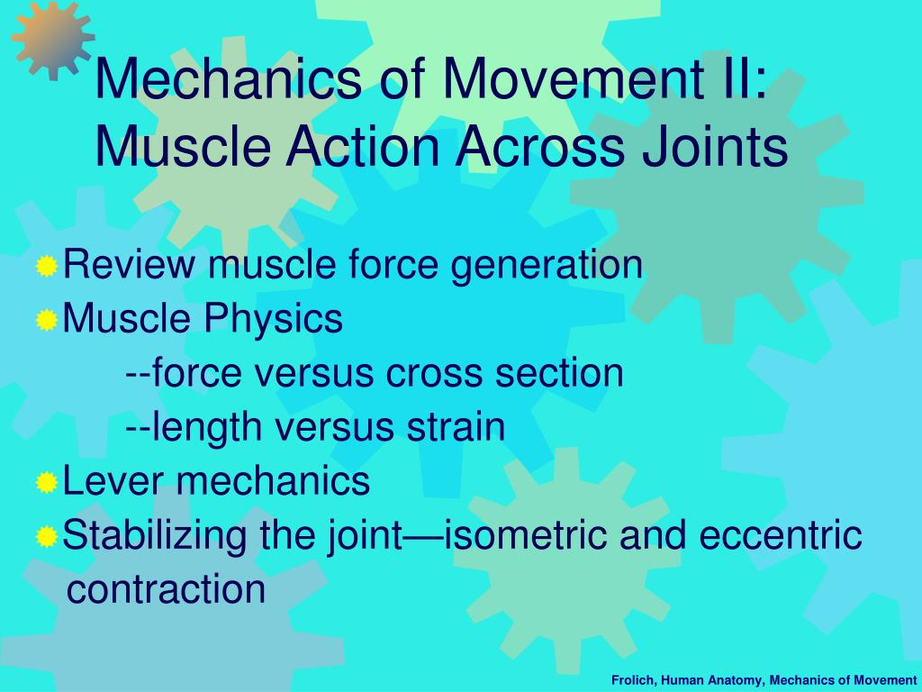 mechanics of movement ii muscle action across joints l.