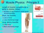 muscle physics principle ii