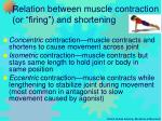 relation between muscle contraction or firing and shortening