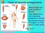 types of fascicle arrangements