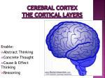 cerebral cortex the cortical layers