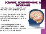 dopamine norepinephrine endorphins