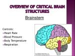 overview of critical brain structures