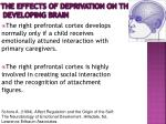 the effects of deprivation on the developing brain